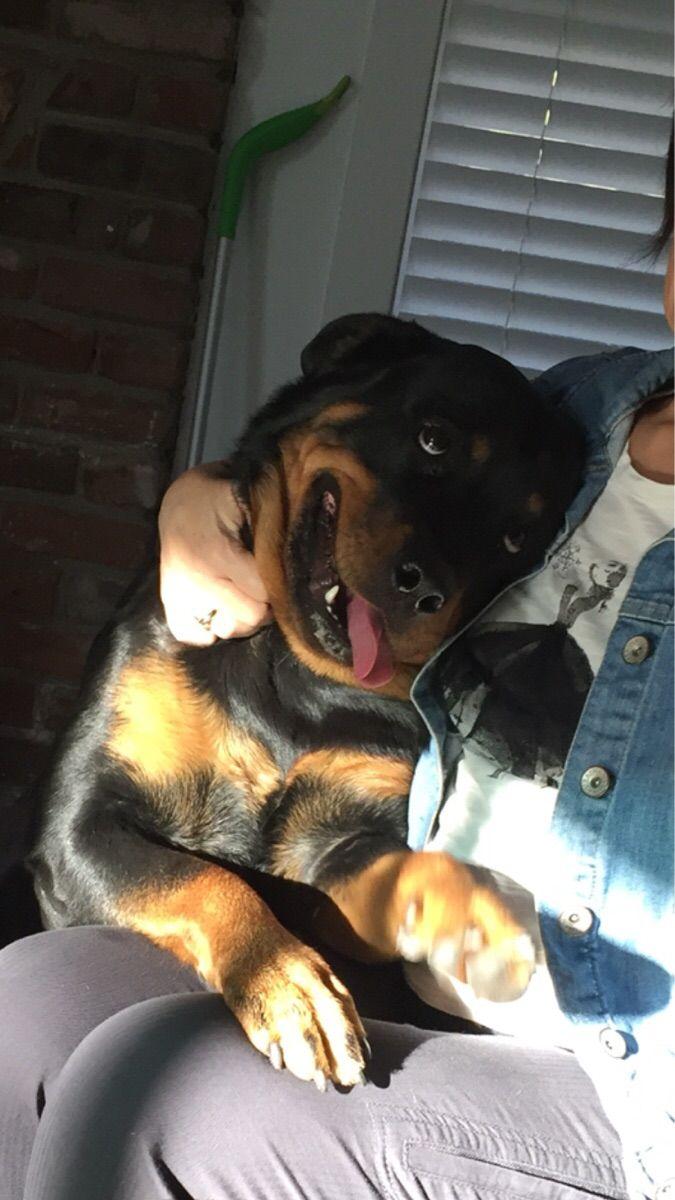 My Rottweiler when Grandma visits.