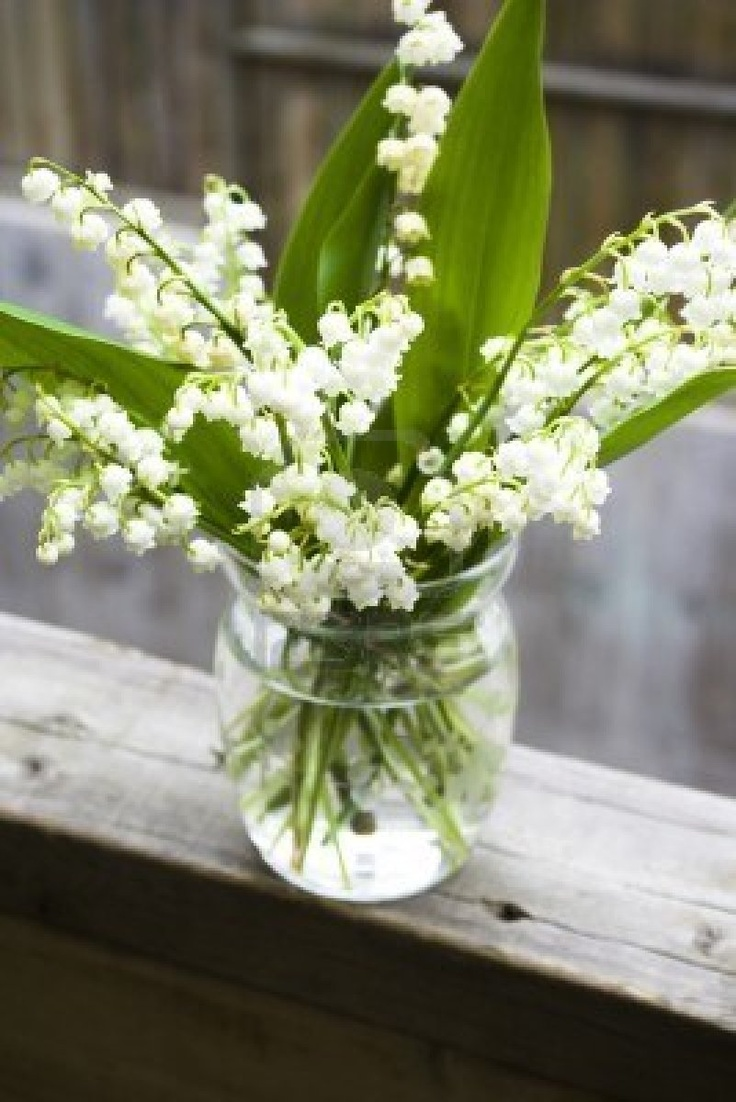 72 best lily of the valley images on pinterest lily of the valley my beloved lily of the valley in a quaint and also beloved mason jar izmirmasajfo