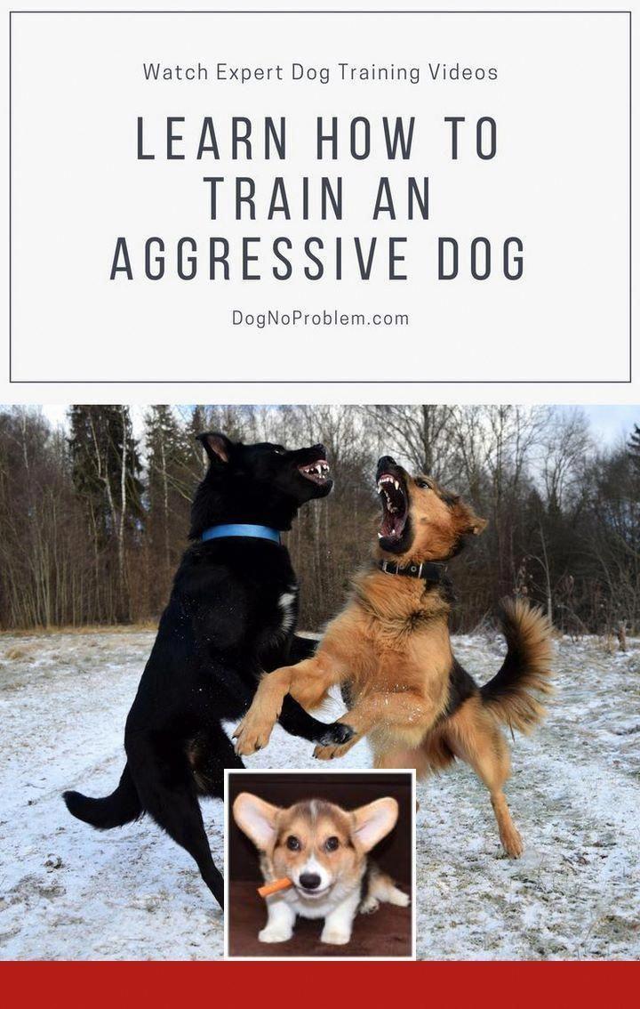 Hikingdogwithdogsofinsta Mountaindog Hikingdogs Bestdogever
