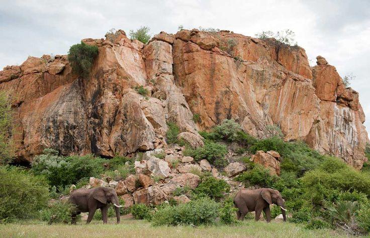 Mapungubwe National Park dove confluenza dei fiumi Limpopo e Shashe segna l'incontro tra Sud Africa, Botswana a Zimbabwe.