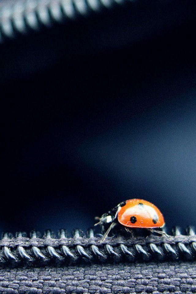 Ladybug 2 Smartphone Wallpaper