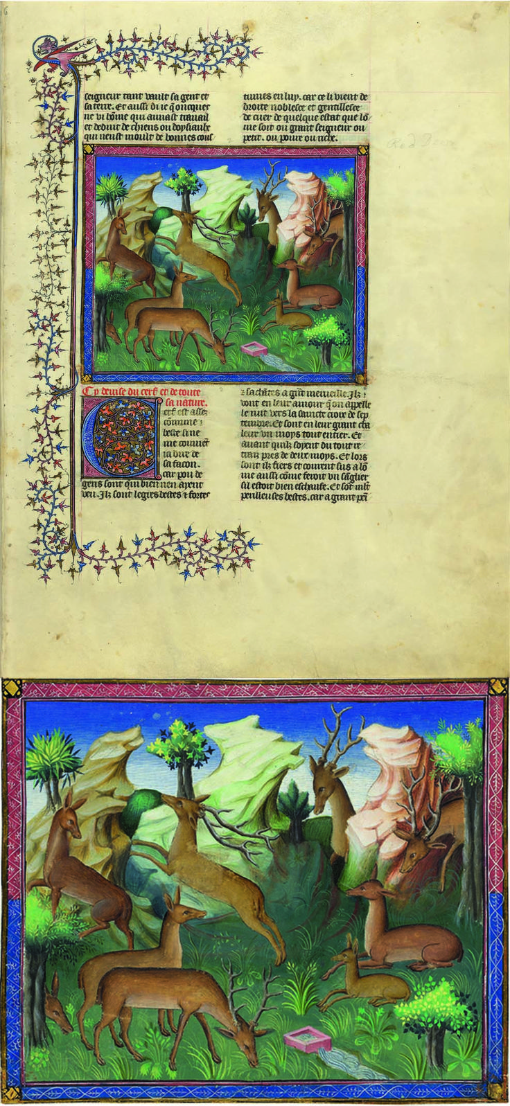 The Hart | Livre de la chasse, in French and Latin | Text by Gaston III Phoebus, Count of Foix (1331–1391) | Illuminated by a Master of the Bedford Trend | France, Paris | ca. 1407 | The Morgan Library & Museum