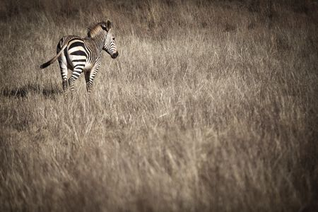 Wildlife  Photo by Afur Wong H. — National Geographic Your Shot
