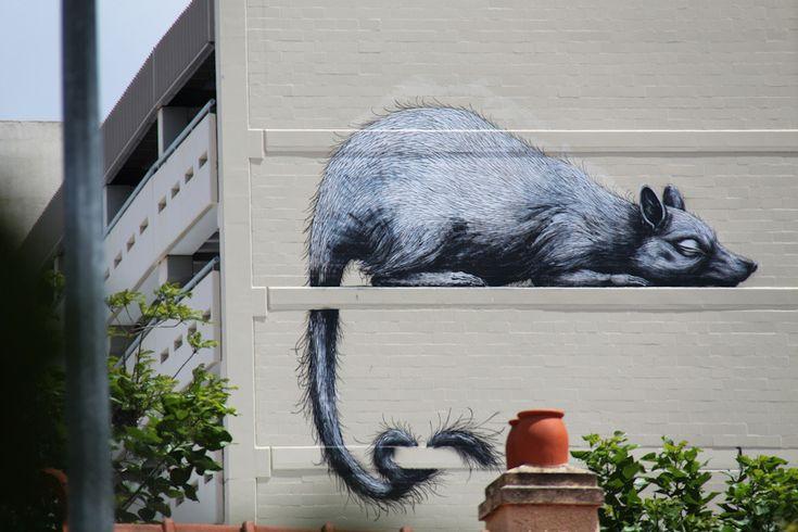 ROA, Perth Australia