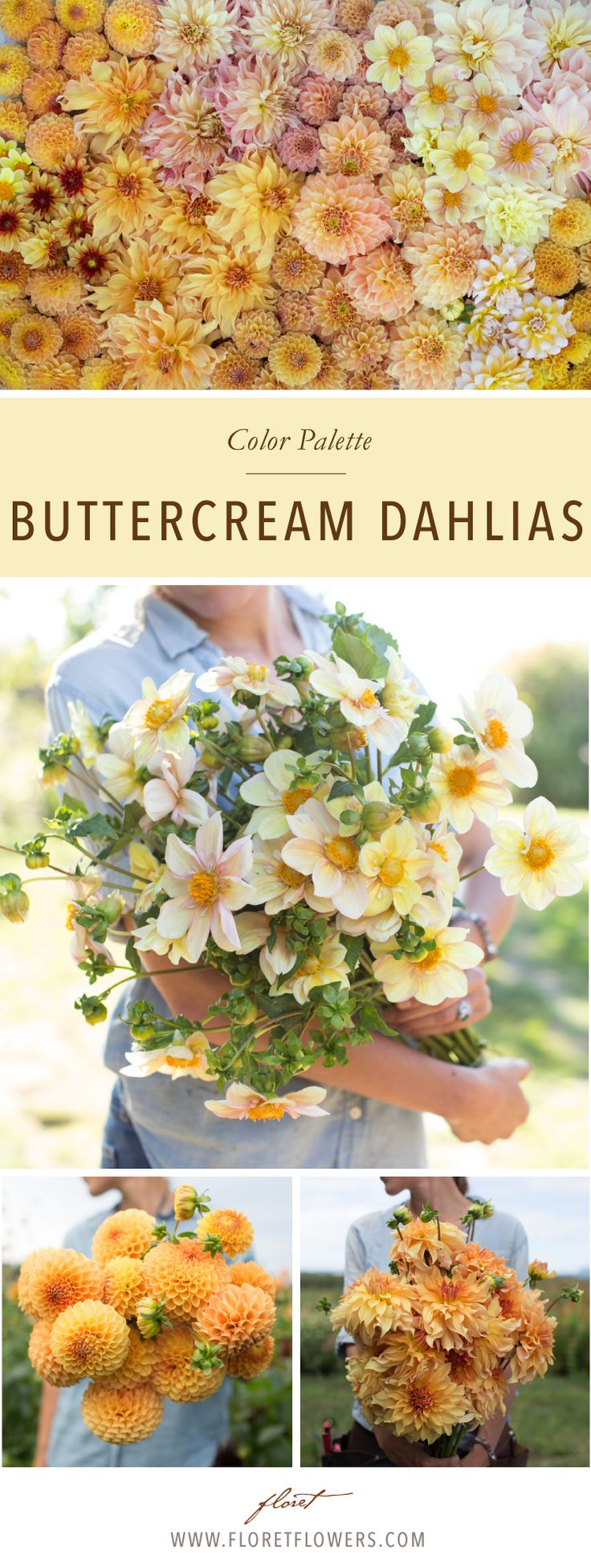 Floret's favorite pale yellow, buttercream dahlias: Formby Crest, Big Brother, Appleblossom, Bracken Palomino, Valley Tawny, Seattle, Breakout, Rock Run Ashley, Penhill Watermelon, Blyton Softer Gleam, Irish Pinwheel, Suncrest, Golden Scepter.