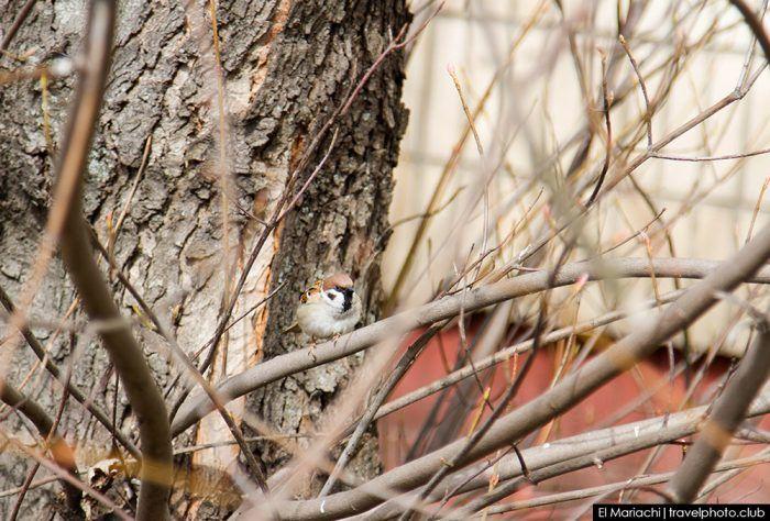 Мимикрия в живой природе. Теория эволюции и естественный отбор.  #природа #птицы #птички #фотография #фотографии #животные #наука #интересное #факт #факты  #воробей #воробьи