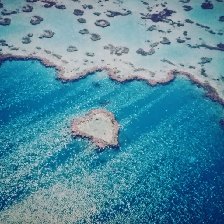 Had such an amazing time flying over the Great Barrier of Reef few years ago. Wonders of  Mother Nature  Foi incrível sobrevoar a grande barreira de corais. Maravilhas da mãe natureza  #australia #greatbarrierreef #diving #cairns #whitsunday #cbviews #photolover #sobrelugares #viajeomundo #instalike #instagood #instatravel #wanderlust #instalike #f4f #instapassport #l4l #brasileirospelomundo #damgoodtrips #amateurphotography #photolike #photofollow by voyage_en_couleurs http://ift.tt/1UokkV2