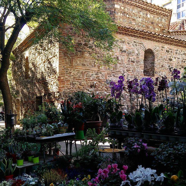 Λουλουδαδικα#flower #market #yahudihamam #thessaloniki #alltheworld1_ #greecetravelgr1_ #greecelover_gr #great_captures #great_captures_greece #thesstips #thebest_capture #love_greece #wu_greece #wu_europe #_europa #passport_travel_the_world #ig_greece #igworldclub_hdri #architecture #gardenlove #monument #roundphot0 #thebeautifulgreece #inthessaloniki #urbangarden #urban_greece