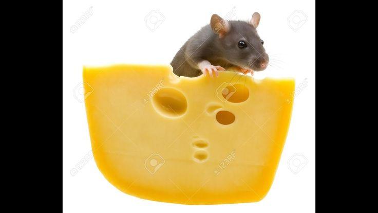 Что стало с мышами попавшими в РАЙ научный эксперимент