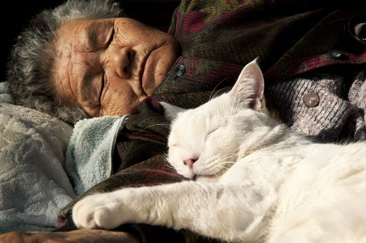 This Grandma And Her Cat Are The Cutest Best Friends Ever