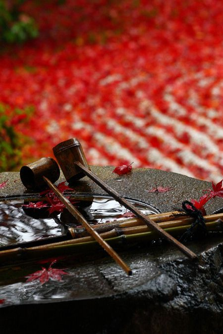 Kenjinji-temple, Kyoto ??? #Japan For articles on adventure travel including Japan check out adventurebods.com