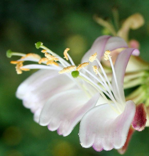 20 best images about Les Fleurs (Les? No! MORE!) on Pinterest