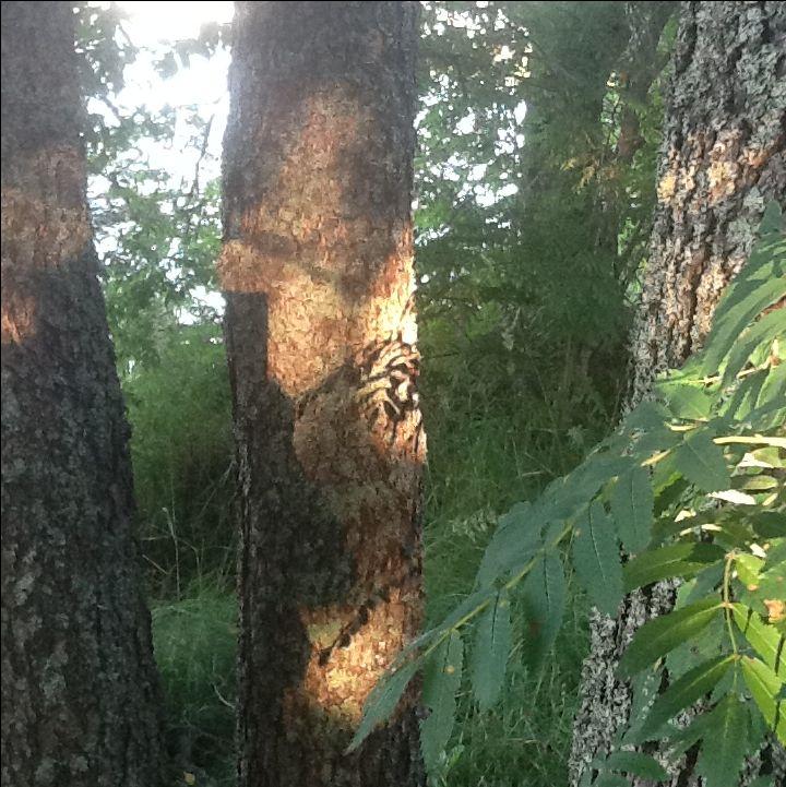 Valon ja varjon taidetta mökkimme puunrungolla Viitasaarella. Shadow art reflection  in our summer cottage in Viitasaari Finland