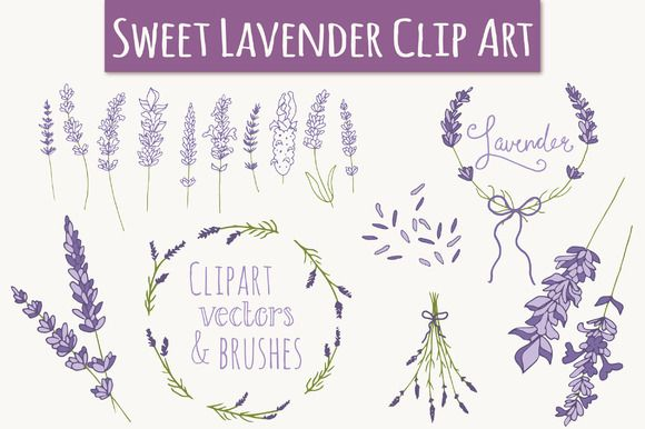 Check out Lavender Clip Art & Vectors by The Pen & Brush on Creative Market