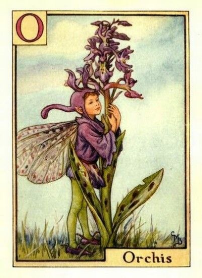 Orchis Flower Fairy » Flower Fairy Prints- Vintage Fairy Prints by Cicely Mary Barker