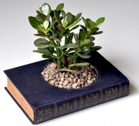 book planter: Plants, Planters, Diy, Craft Ideas, Garden, Old Books, Recycled Book