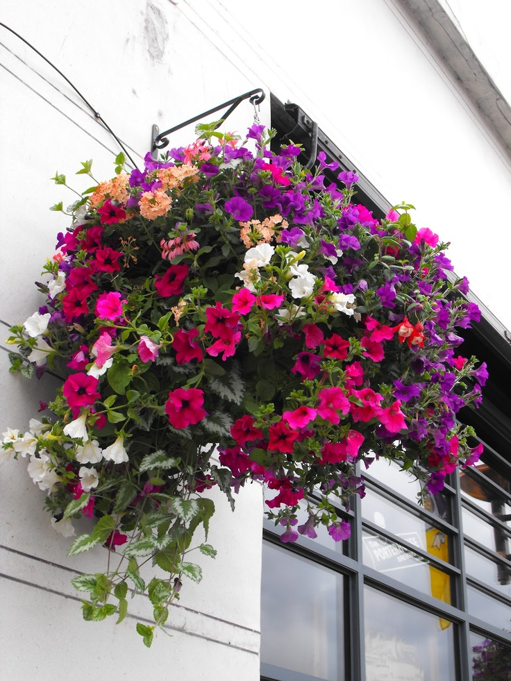 The Best Plants for Perennial Hanging Baskets | Hunker