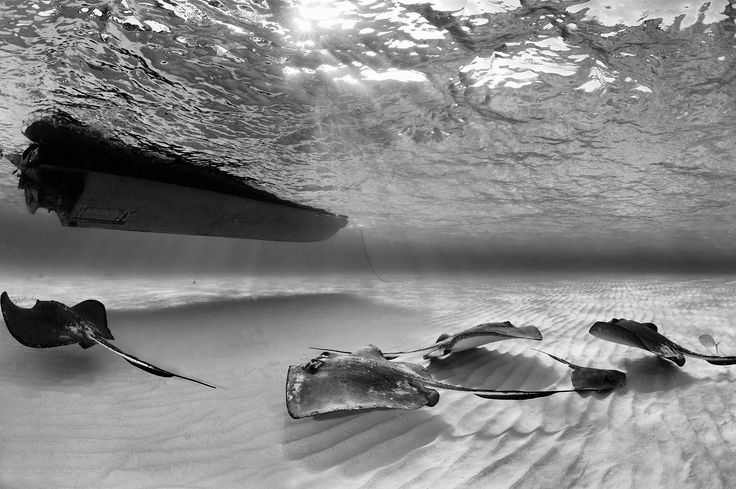 Top 100 2015: Best Marine Environment - Saba is number 3!