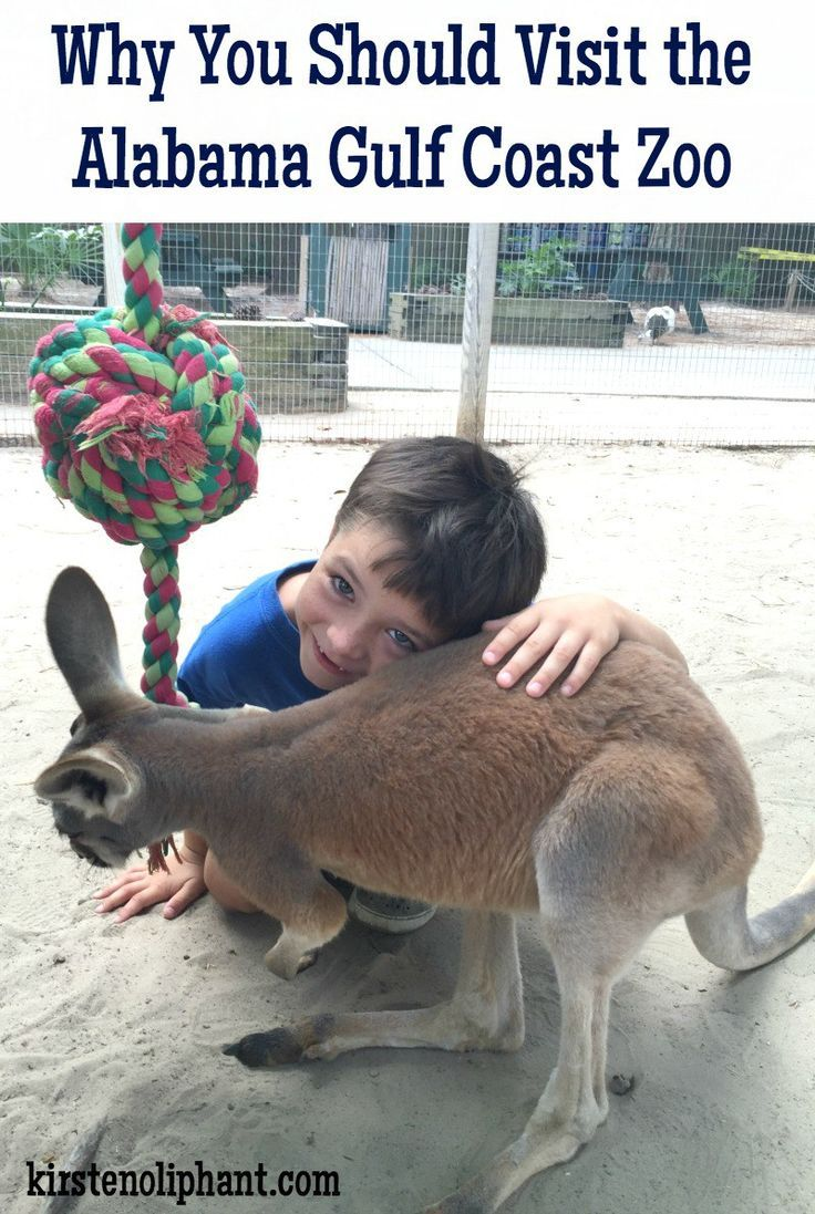 Five reasons you should visit the Gulf Coast Zoo, our favorite part of family vacation at Gulf Shores Alabama!