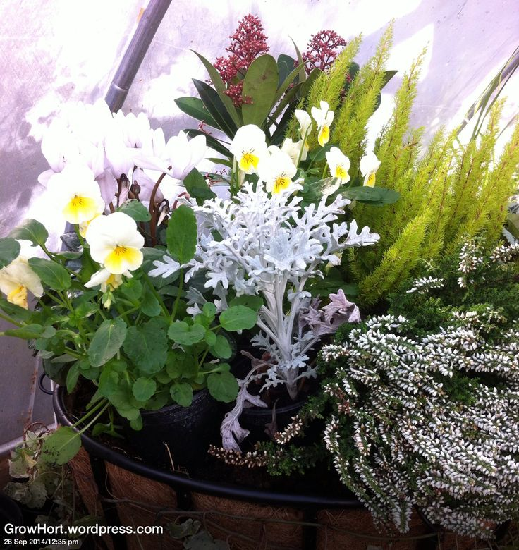 Hanging Flower Baskets For Winter : Ideas about winter hanging baskets on
