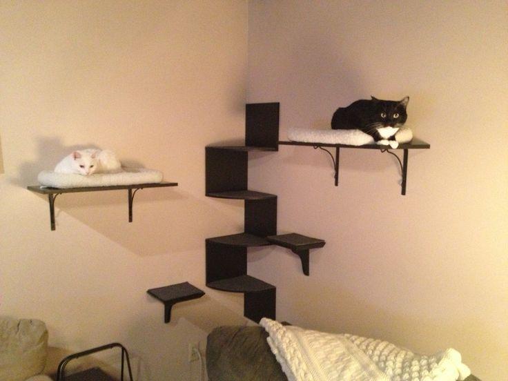 My Diy Cat Wall Cat Trees Shelves Pinterest Cat