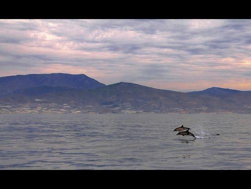 Los mejores lugares y épocas para el avistamiento de cetáceos en España... Parece que la primavera es la elegida por ellos para surcar nuestras aguas.
