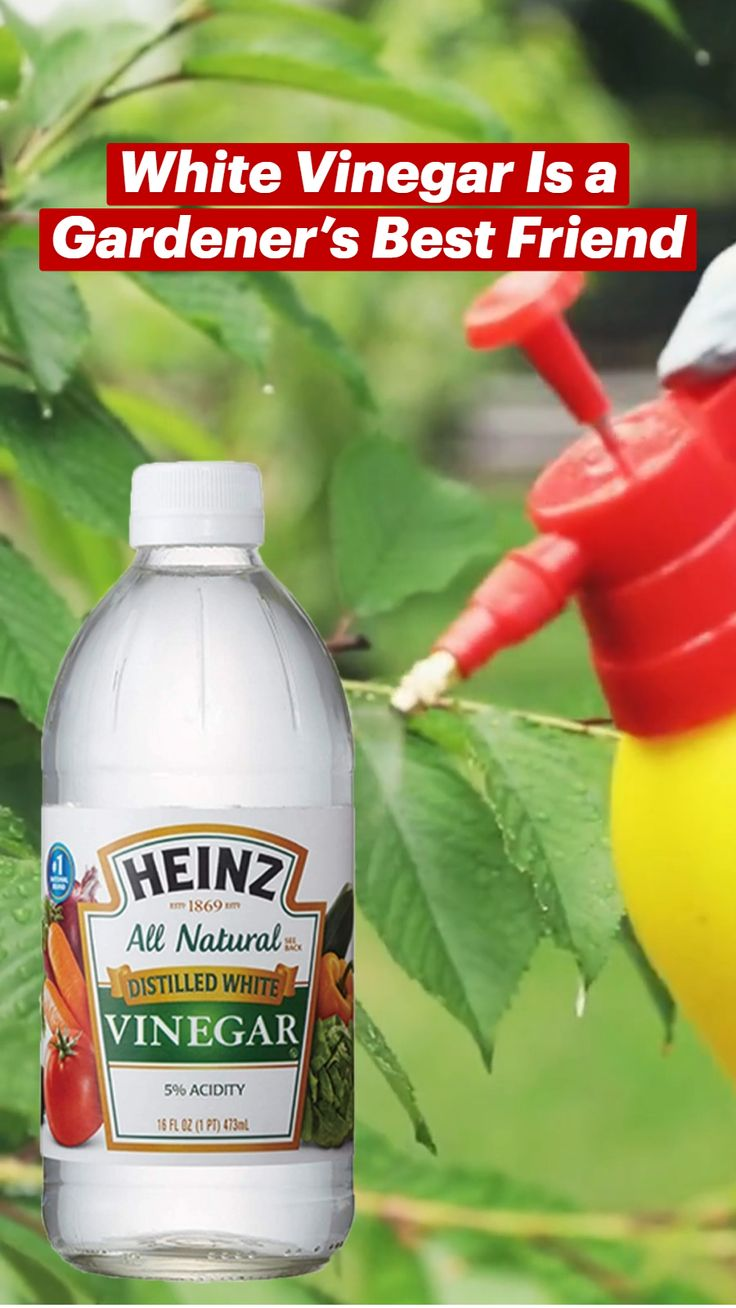 Natural Bug Spray, Garden Fire Pit, Card Making Templates, Distilled White Vinegar, Garden Products, Great Life, Fruit Trees, Sprays, Organic Recipes