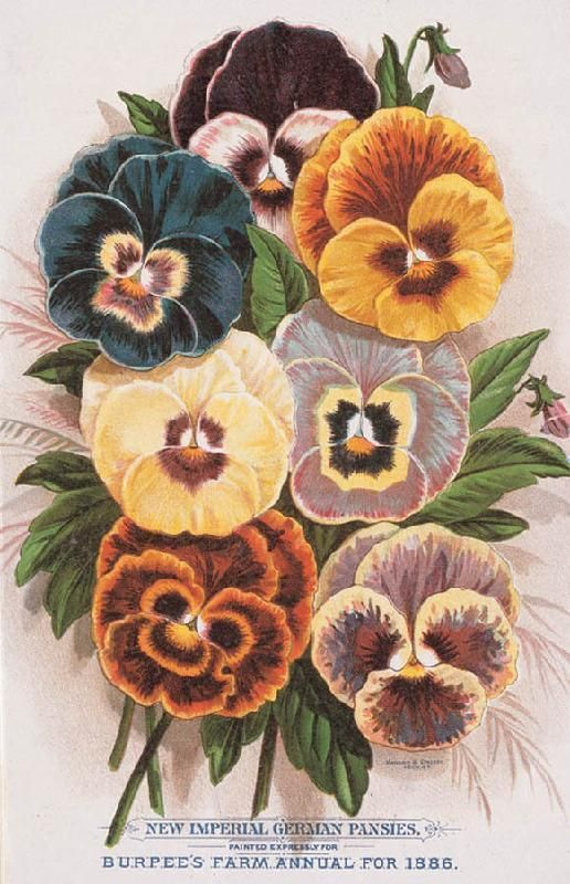 Vintage Seed Packet Images and Vintage Seed Catalogs