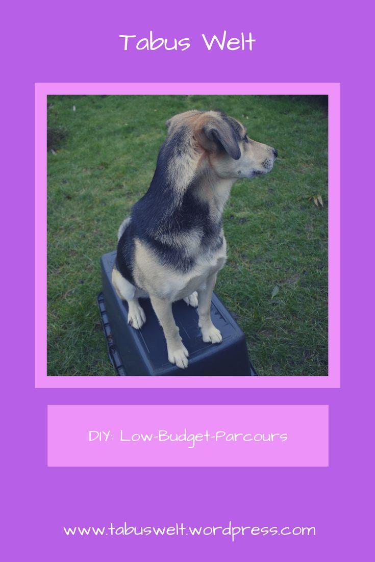 Diy Low Budget Parcours Hunde Hundeerziehung Hund Beschaftigen