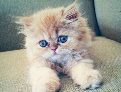 Cutie Pie - Click to see loads of great pictures of cats and kittens to brighten your day