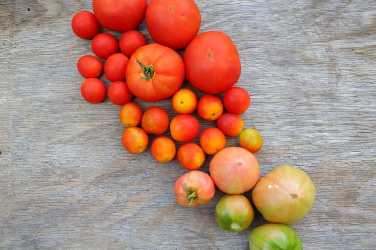 Heirloom Tomato Salad vegetarian recipe WWW.EFFIGEORGIA.COM.AU