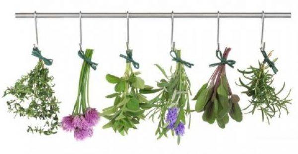 Πλήρης κατάλογος βοτάνων και οι θεραπείες τους. Δείτε ποιες ασθένειες θεραπεύει κάθε βότανο.