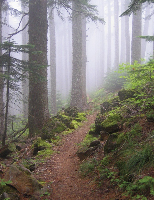 Benson Plateau - Oregon -  I hope to get to hike this part of the PCT with my mutts this year. . .