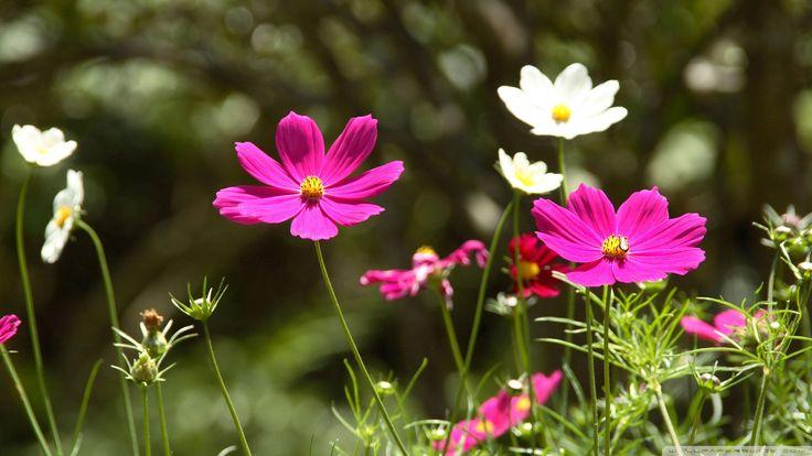 spring flowers landscape - acrylic