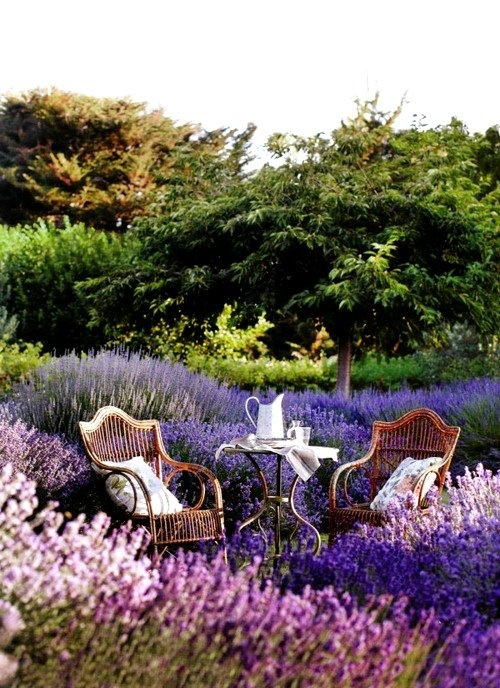 Lavender Garden, i could sit here all day