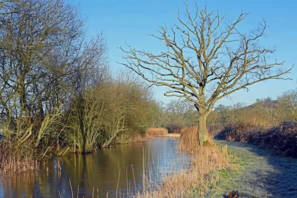 Wey and Arun Canal, Drungewick, Loxwood, West Sussex