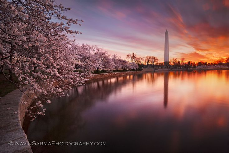 8 Facts About Washington DC's Cherry Blossom Festival
