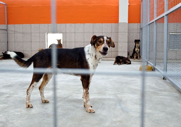 Unthinkable! Couple Caught Selling Hundreds of Dogs to Labs | Jackie's Space