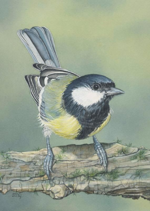 Pin On Coloring For Birds