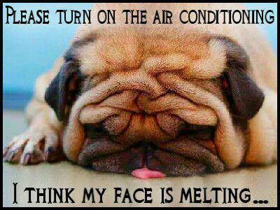 I think my face is melting.