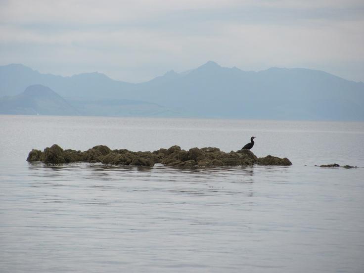 bird on a rock - Scotland