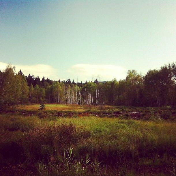 Šumavské mokřady