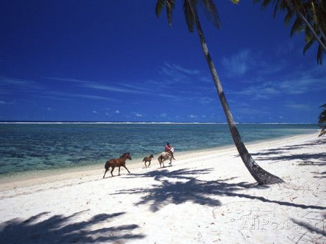 Horses on Beach, Tambua Sands Resort, Coral Coast, Fiji Photographic Print by David Wall at AllPosters.com