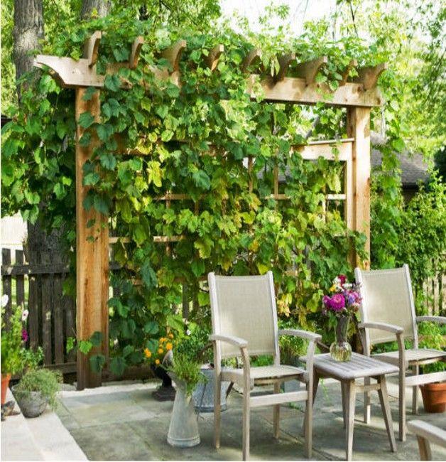 32 Best Newbury Park Backyard CA Vineyard Theme Images On