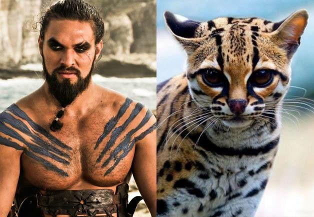 Khal Drogo !