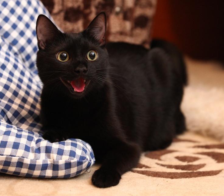smiling kitty