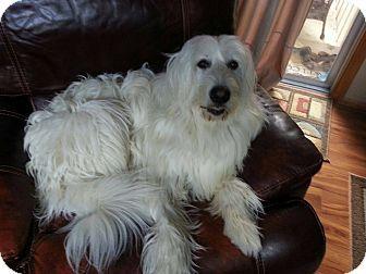 1000 Ideas About Irish Wolfhound Breeders On Pinterest