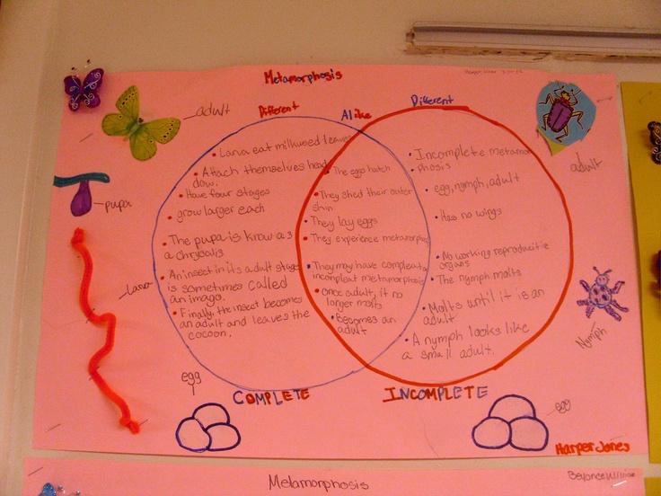 complete and incomplete metamorphosis venn diagram