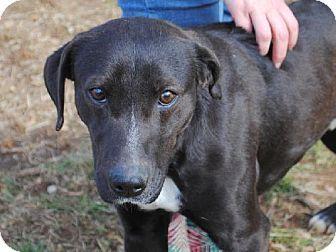 Anniston, AL - Labrador Retriever Mix. Meet Mason, a dog for adoption. http://www.adoptapet.com/pet/12283989-anniston-alabama-labrador-retriever-mix