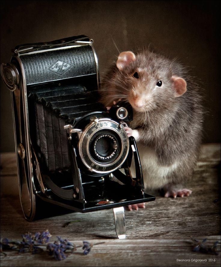 День фотографа. С опозданием)) Eleonora Grigorjeva